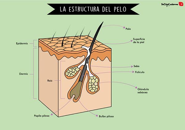 Masaje del cabello; ¿cómo estimular el crecimiento de tu cabello?