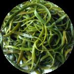 Propiedades de las algas Espagueti de mar