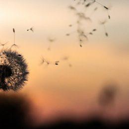 sterimar moquillo alergia primaveral