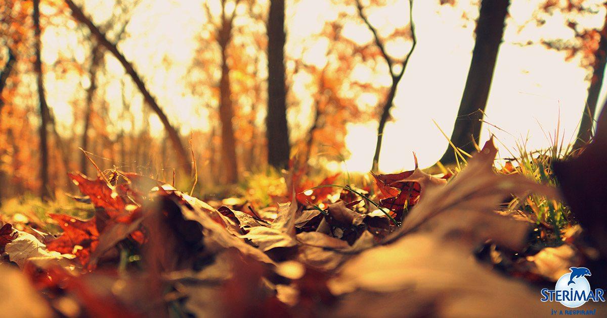 otoño estamos preparados sterimar