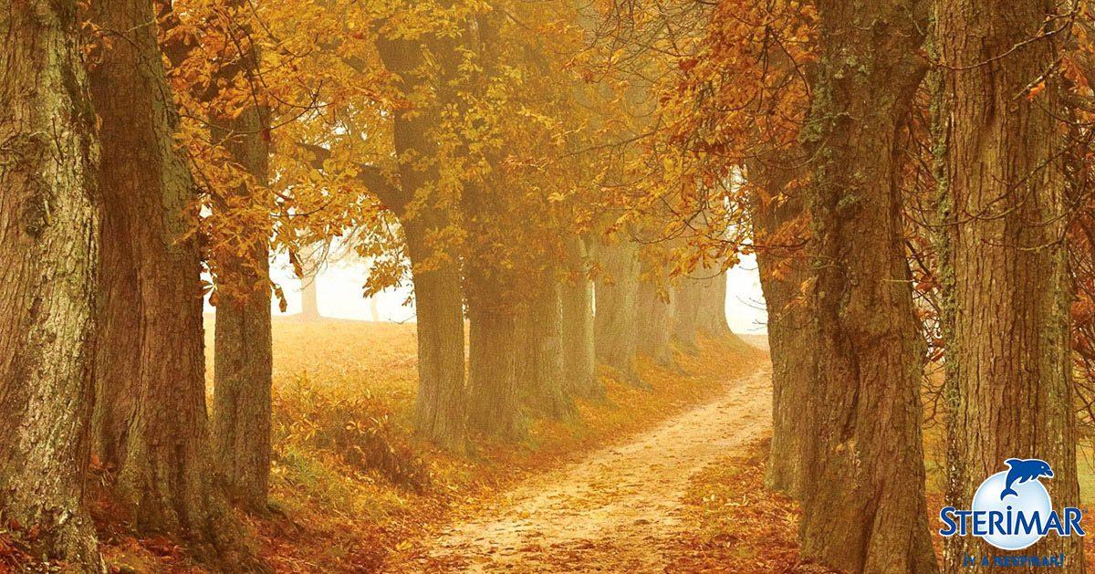 respira otoño cuerpo mente sterimar